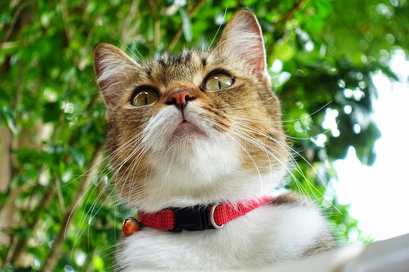 Cute cat A pet's perspective stock photography