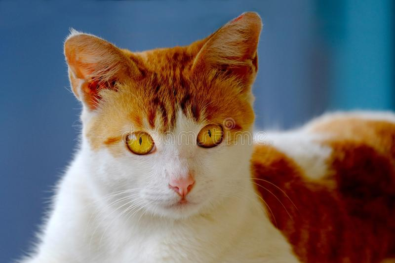 Cute cat, photographed from the front,. Are looking at bottom with serious and scary stare stock image