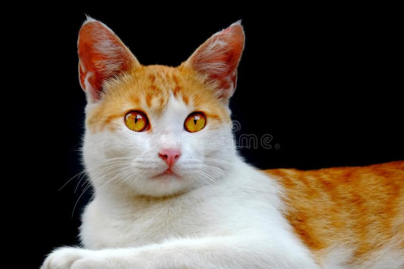 Cute cat, photographed from the front. Are looking at front with serious stare stock images