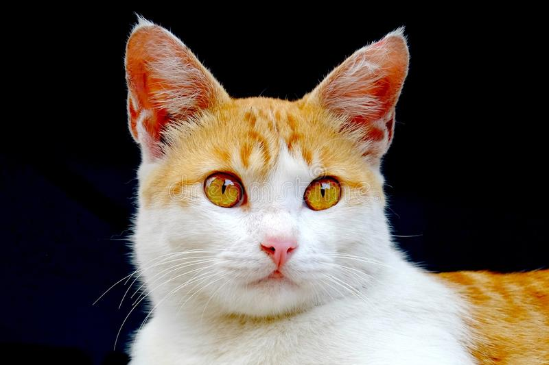 Cute cat, photographed from the front. Are looking at front with serious stare stock image