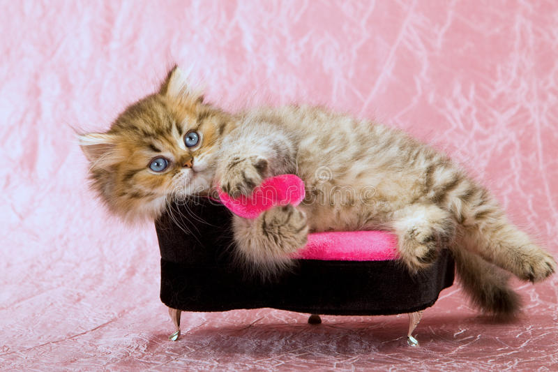 Cute cat with pink love heart stock photos