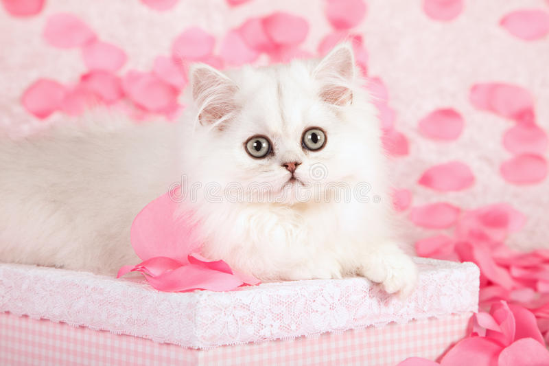 Cute Cat And Pink Petals Stock Image Image Of Beautiful 28076385