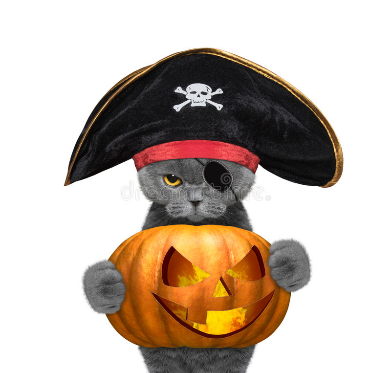 Cute cat in a pirate costume with halloweens pumpkin vector illustration