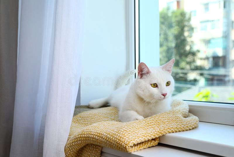 Cute cat on plaid at window indoors. Warm  concept. Cute cat on plaid at window indoors. Warm house concept royalty free stock image