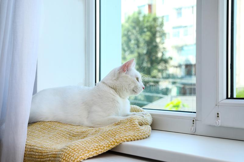 Cute cat on plaid at window indoors. Warm  concept. Cute cat on plaid at window indoors. Warm house concept royalty free stock photo
