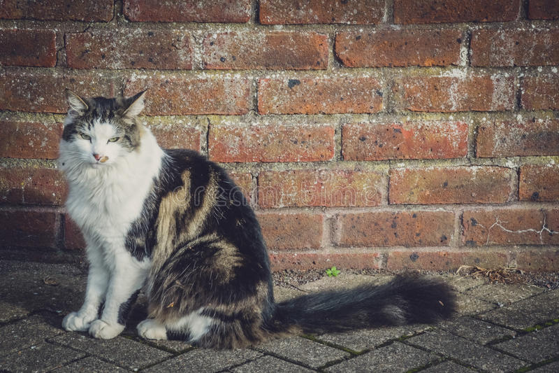 Cute cat portrait. Portrait of a cute furry cat sitting on the ground stock photography