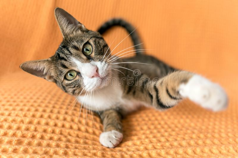A cute cat is posing at home. A cat portrait close-up stock photo