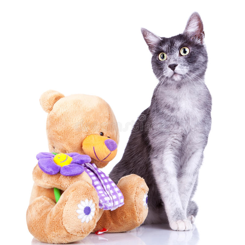 Download Cute Cat Posing Near A Teddy Toy Stock Image - Image: 21821817