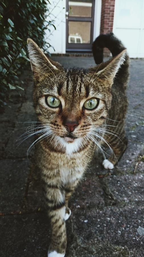 Cat miauw eyes royalty free stock images