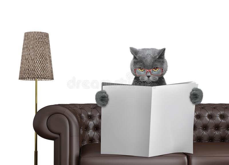 Cute cat reading newspaper with space for text on sofa in living room. Isolated on white. Background royalty free stock image