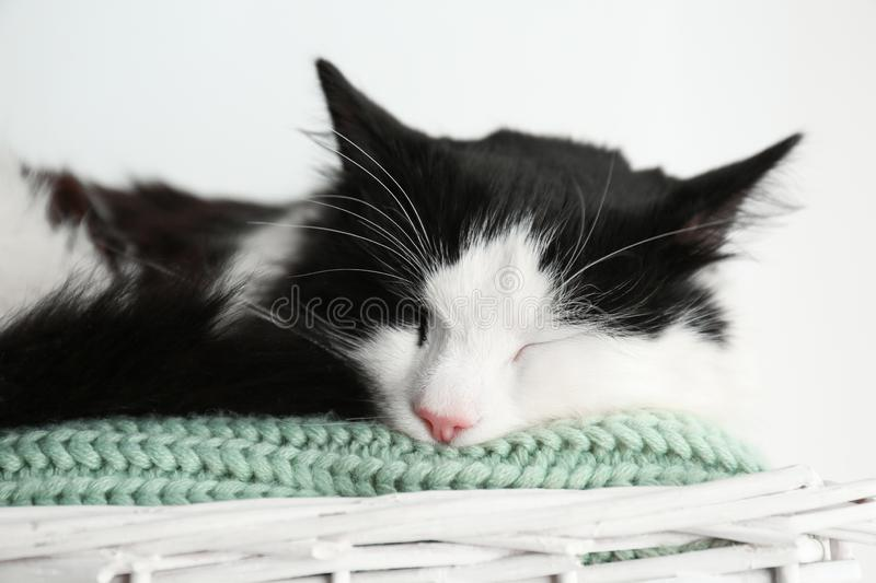 Cute cat relaxing on green knitted fabric in basket. Lovely pet stock image