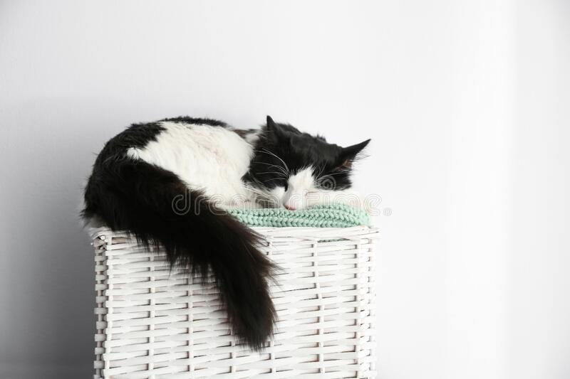 Cute cat relaxing on green knitted fabric in basket. Lovely pet. Cute cat relaxing on green knitted fabric in basket stock photos