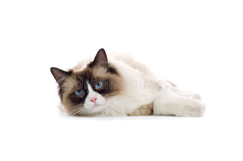 Cute cat relaxing on white stock photos