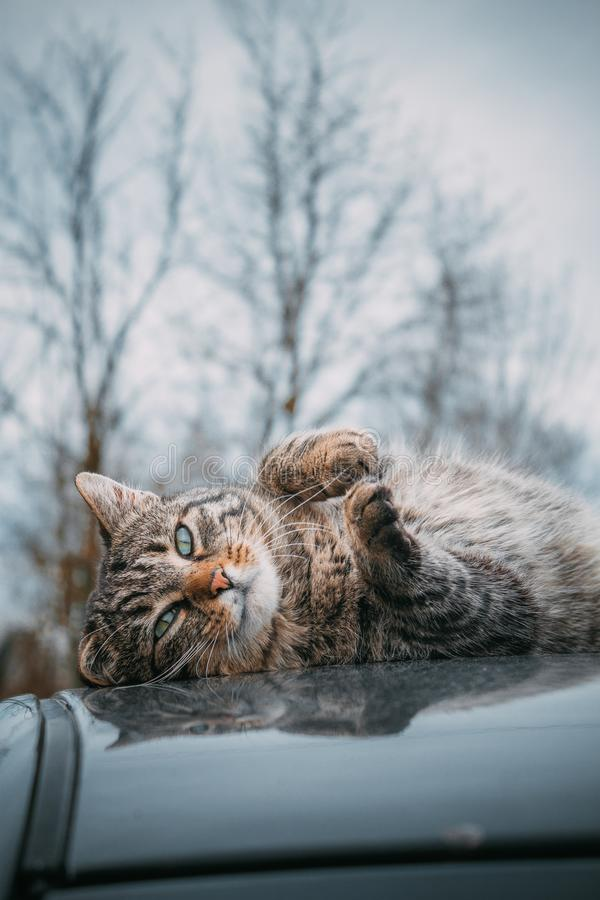 Cute cat on a roof of a car stock photography