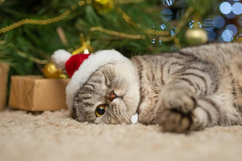 A cute cat in a Santa Claus hat against blurred Christmas lights royalty free stock images