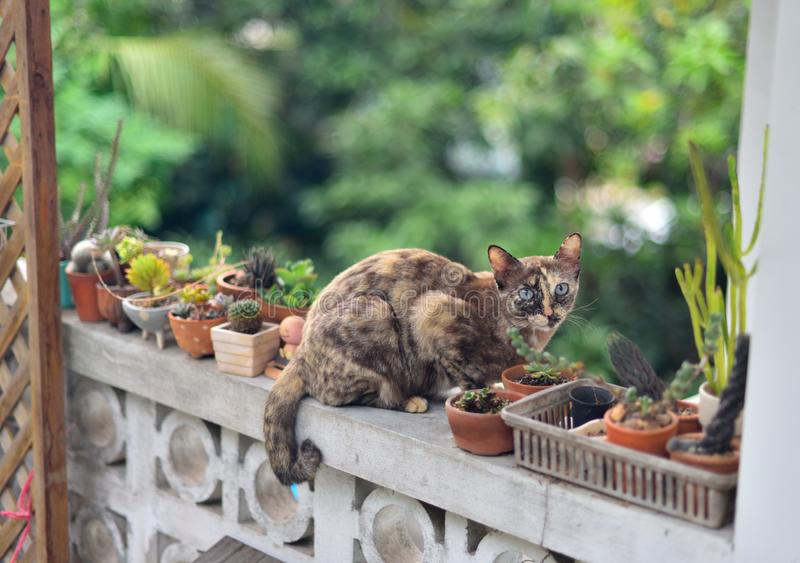 4 413 Cat Garden Wall Photos Free Royalty Free Stock Photos From Dreamstime