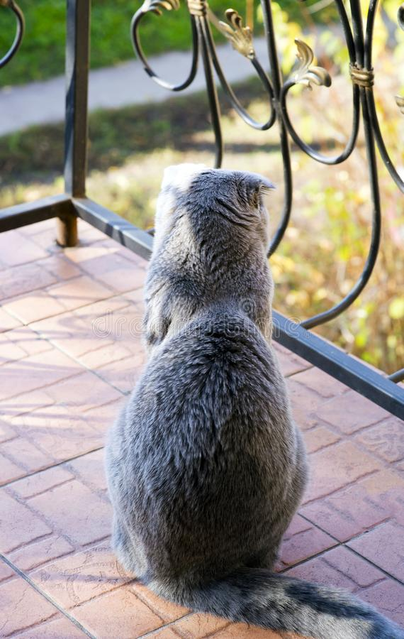 A cute cat sits on the balcony with a wrought-iron fence, with a warm autumn day and looks out onto the street. Wants to walk. royalty free stock images