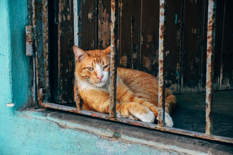 A local cat sits in the shade to cool off from the hot sun in Havana, Cuba. A cute cat sits in the shade to cool off from the hot sun in Havana, Cuba stock image