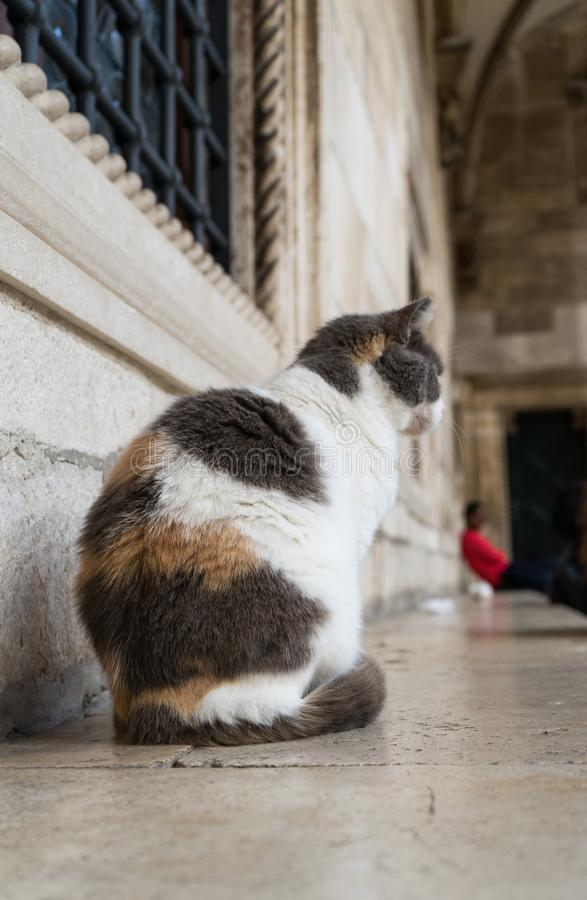 Cute cat sitting in front of the buildings in the old town of Dubrovnik, Croatia. Ginger and black and white cat sitting on the. Window, pet, street, mammal stock photos