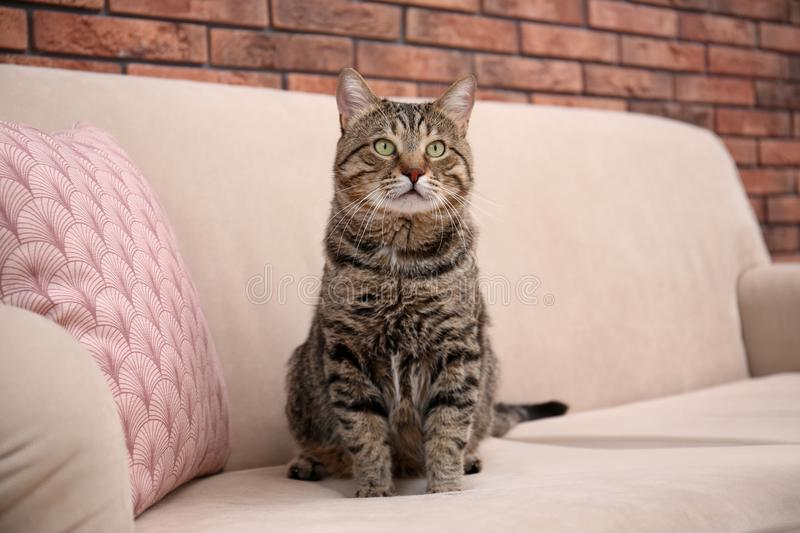 Cute cat sitting on sofa. At home royalty free stock photography