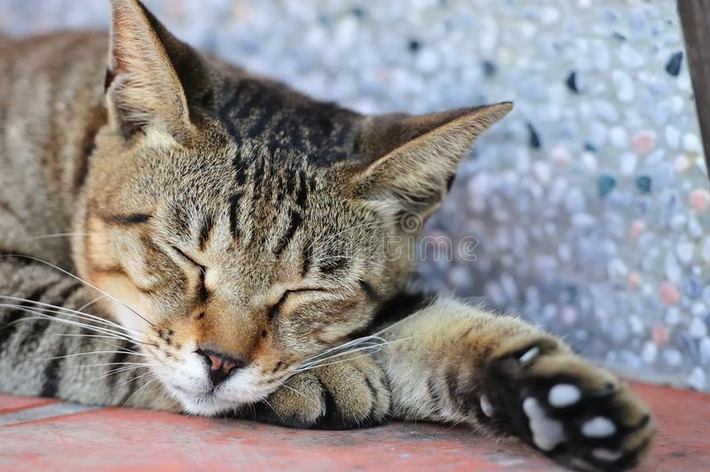Cute Cat Sleeping. Cut cat sleeping on the ground royalty free stock images