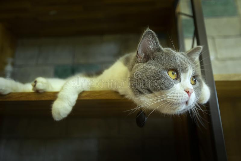 Cute cat sleeping on the platform. In the house royalty free stock image