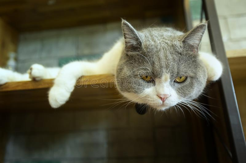 Cute cat sleeping on the platform. In the house royalty free stock photo