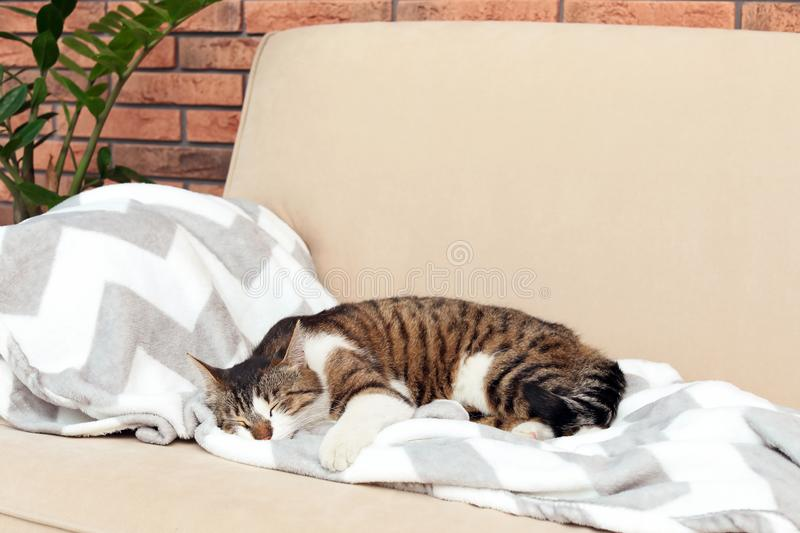 Cute cat sleeping on sofa at home royalty free stock image