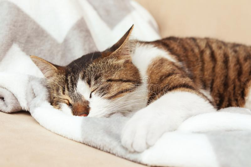 Cute cat sleeping on sofa at home royalty free stock images