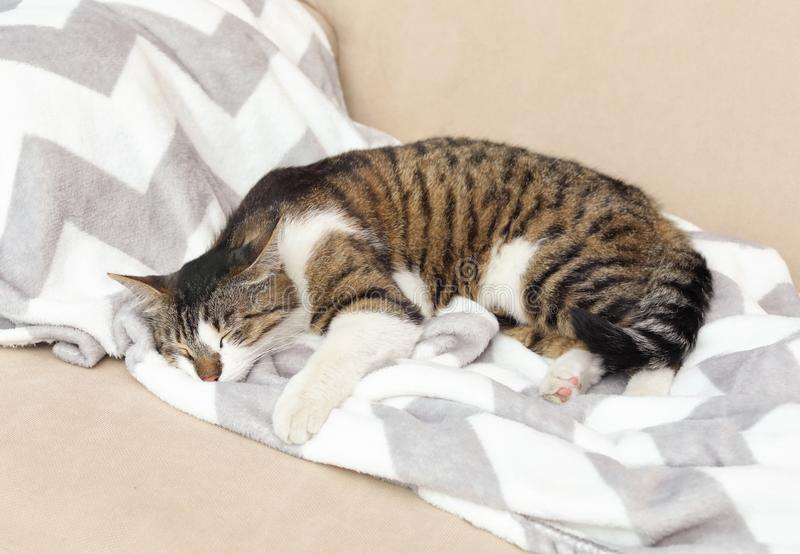Cute cat sleeping on sofa at home stock photo