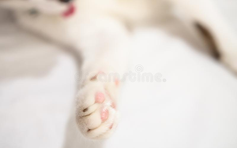 Cute cat is sleeping On a white background Soft-focus image. royalty free stock image