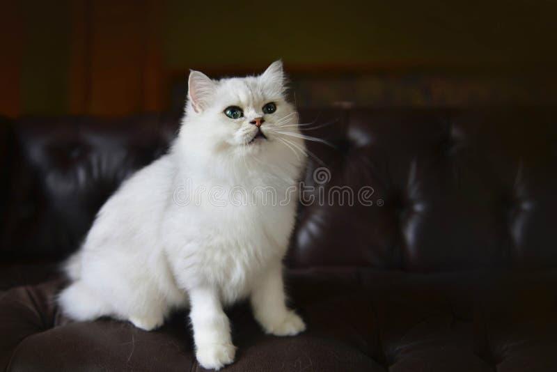 Cute cat on the sofa royalty free stock photos