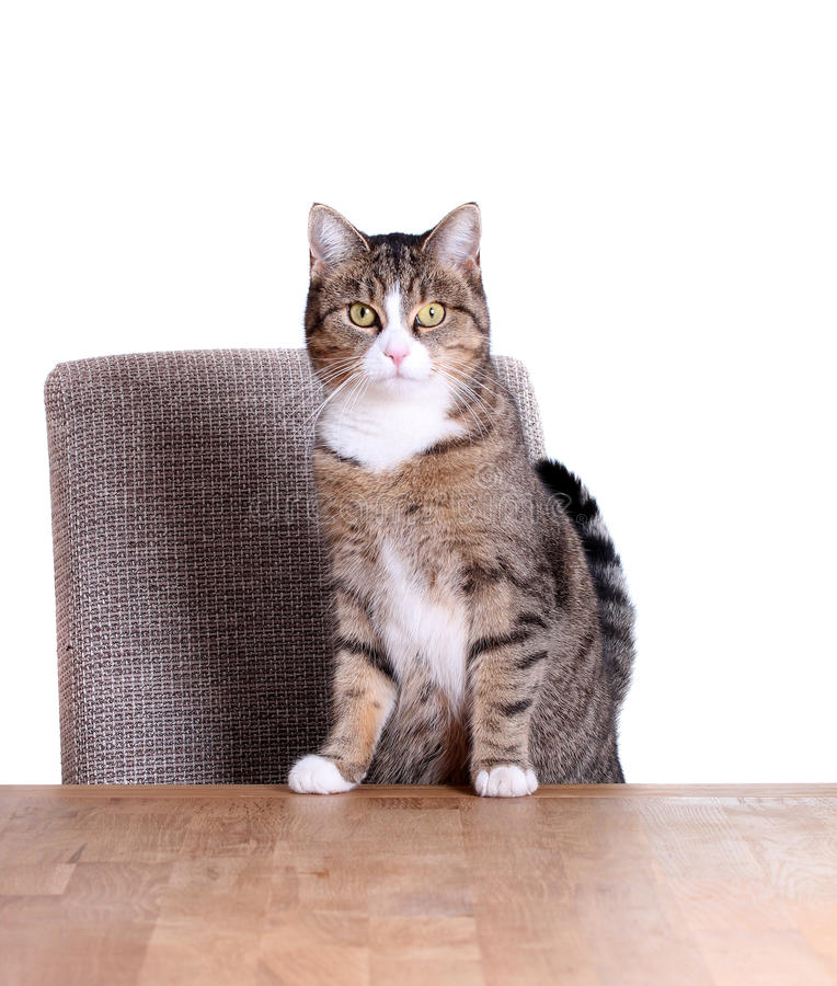Download Cute cat on table stock image. Image of funny, animal - 28201251