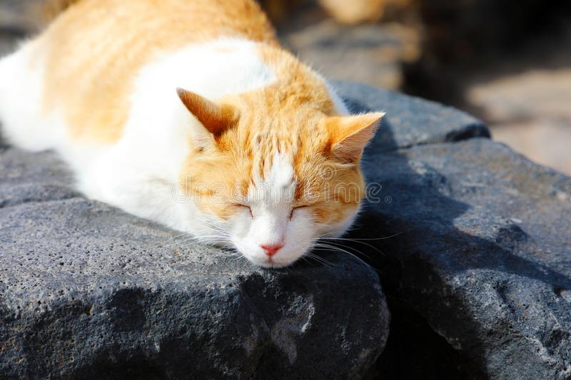 Cute cat take a nap on Lanzarote black stones royalty free stock image