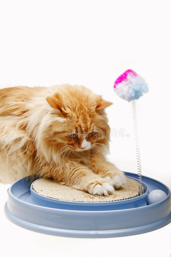 Cute cat with toy royalty free stock photos