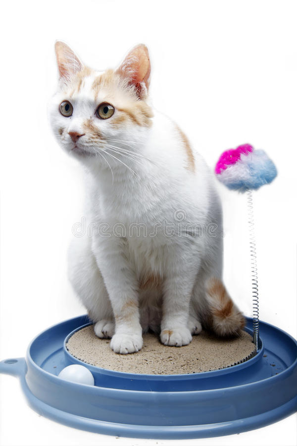 Cute cat with toy royalty free stock photography