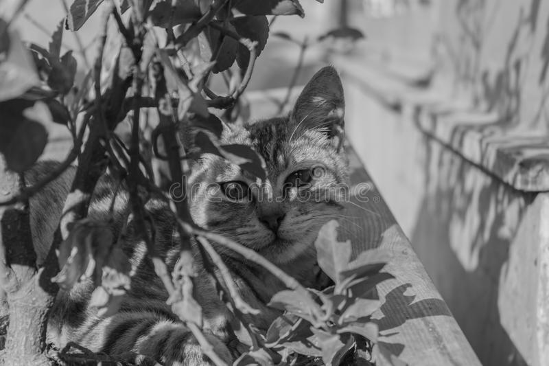 Cute cat in a tree black and white royalty free stock photos
