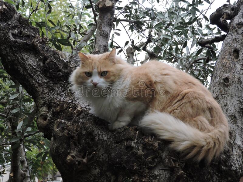 Cute cat on a tree stock images
