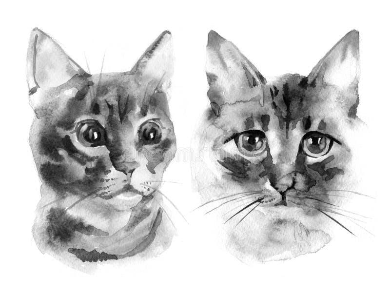 Cute cat. Watercolor illustration. T-shirt print. Greeting card. Poster Kitten. vector illustration