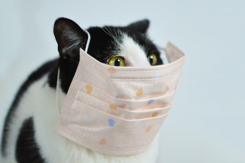 Cat Mask Stock Photos - Download 3,222 Royalty Free Photos