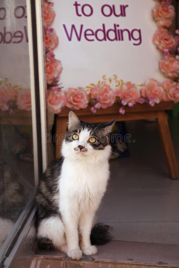 Cute cat in wedding shop stock images