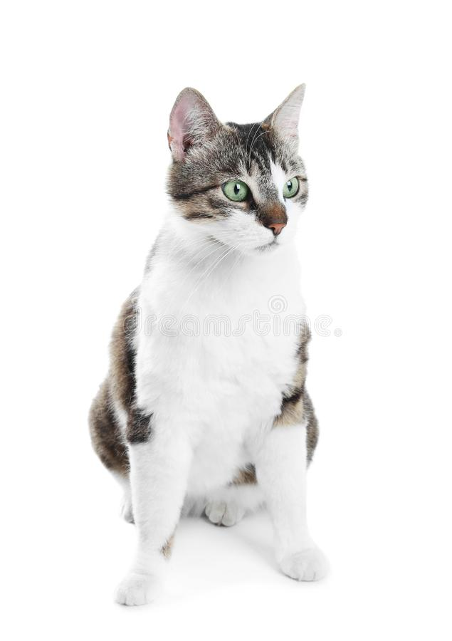 Cute cat on white background stock images