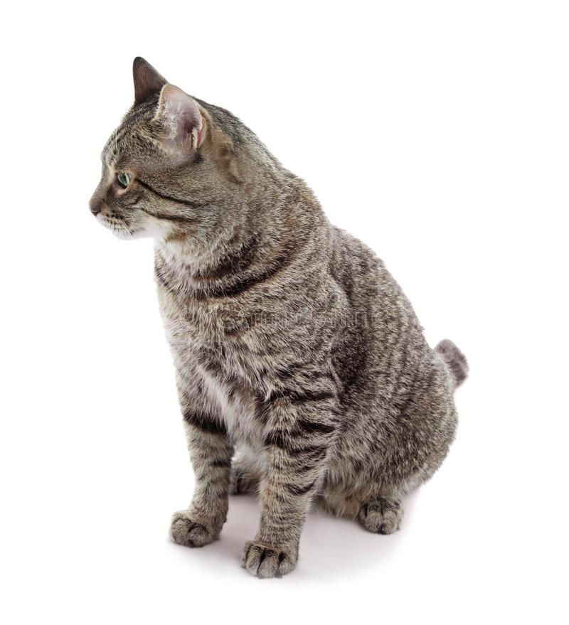 Cute cat on white background royalty free stock photo