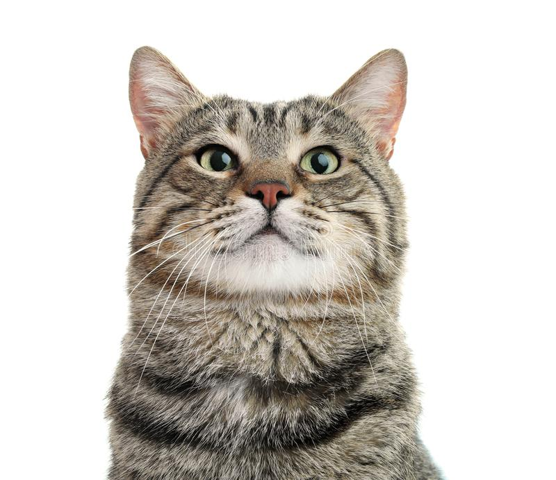 Cute cat on white background. stock image