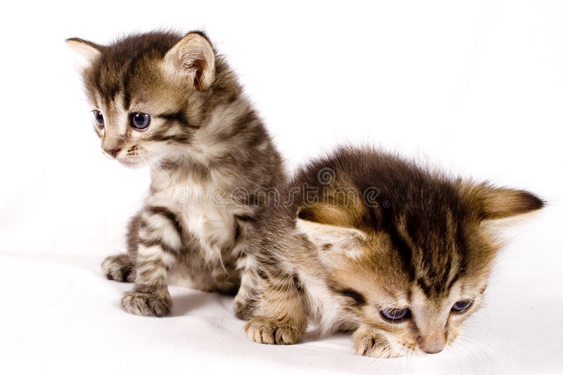 Cute cats stock image