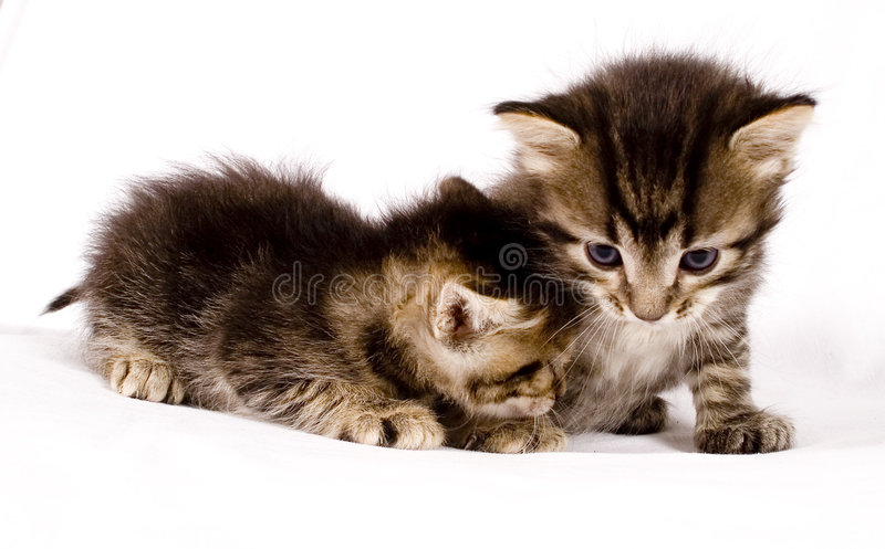 Cute Cats Stock Photos