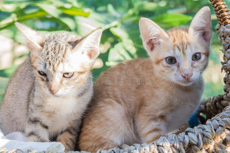 Cute cats in basket and morning nature. Sun royalty free stock photography