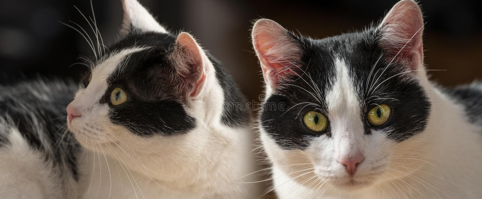 Cute cats portraits close up. In the detail royalty free stock images