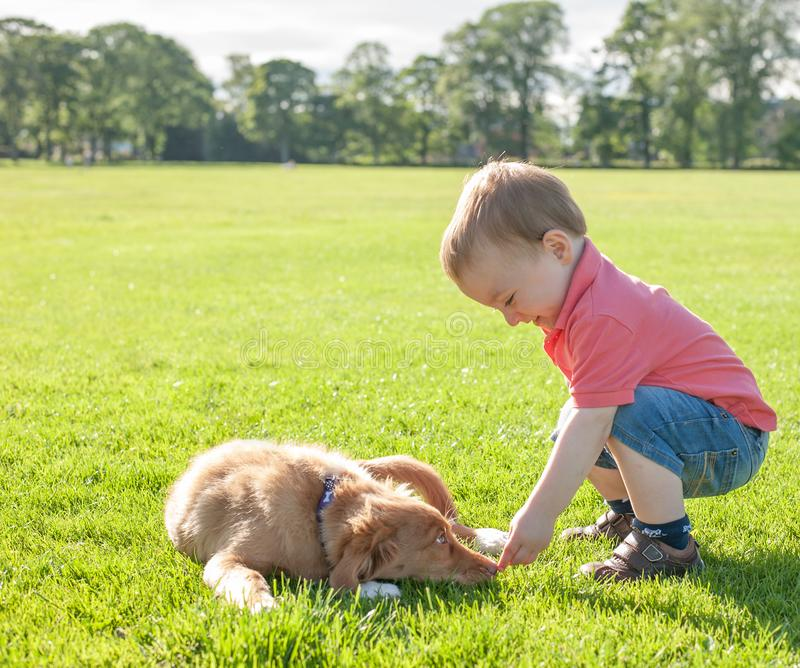 Cute caucasian little todder boy playing with a puppy on a summer meadow. Adorable little caucasian todder boy playing with a cute puppy royalty free stock photography