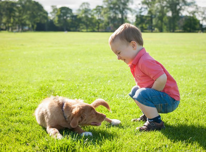 Cute caucasian little todder boy playing with a puppy on a summer meadow royalty free stock photo